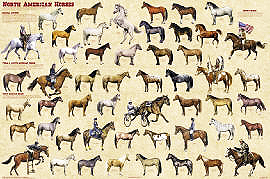 North American Horses Poster