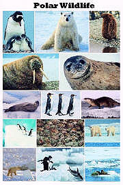 Polar Wildlife